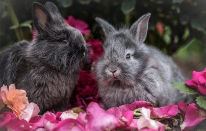 К чему снятся кролики женщине: замужней, незамужней, девушке, беременной – толкование по сонникам