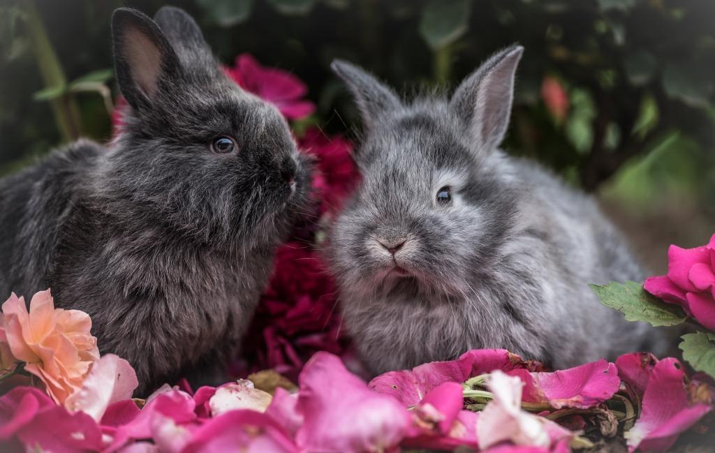 Сонник большой пушистый кролик