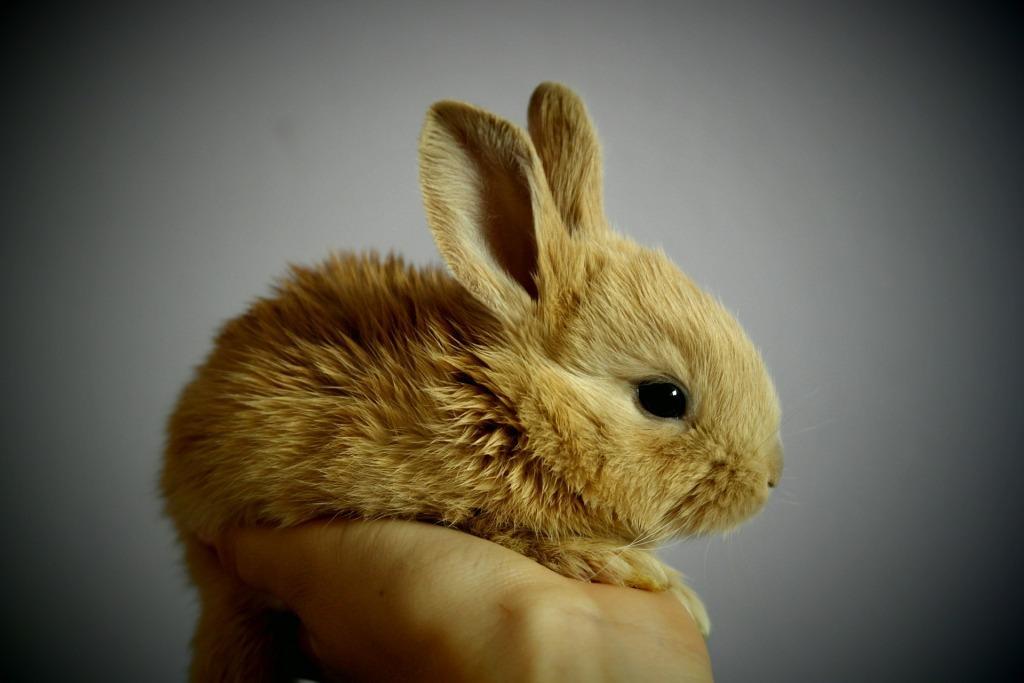 Сонник маленькие зайчики или кролики и хомячки