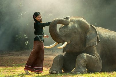 К чему снится слон женщине: молодой, зрелой, беременной, свободной – мнение разных сонников
