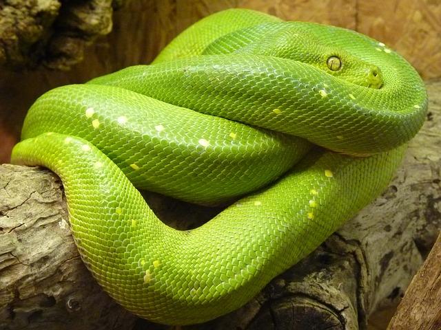 Сонник убить большую змею во сне