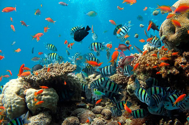 Сонник мертвые рыбки в аквариуме
