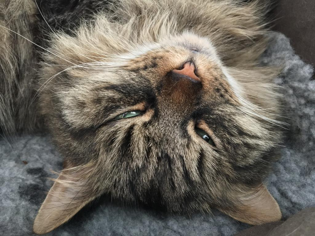 Приснилась Кошка к чему это что означает во сне Кошка