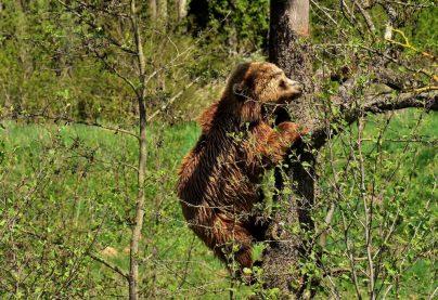 К чему снится медвежонок женщине: замужней, незамужней, девушке, зрелой, беременной – толкование популярных сонников