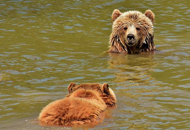 Сонник медведица с медвежатами к чему снится медведица с медвежатами во сне