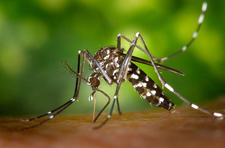 К чему снятся комары по толкованию популярных сонников. К чему снятся комары кусающие, жужжащие, вьющиеся роем - Женское мнение