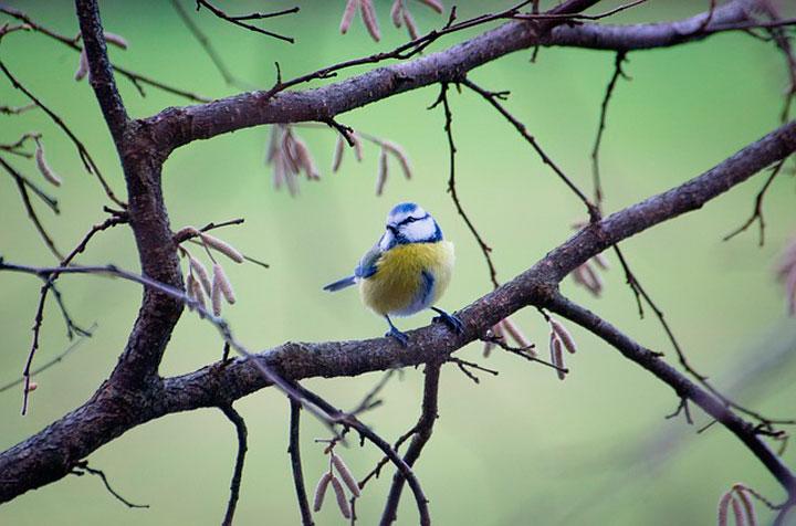 Сонник много маленьких птиц