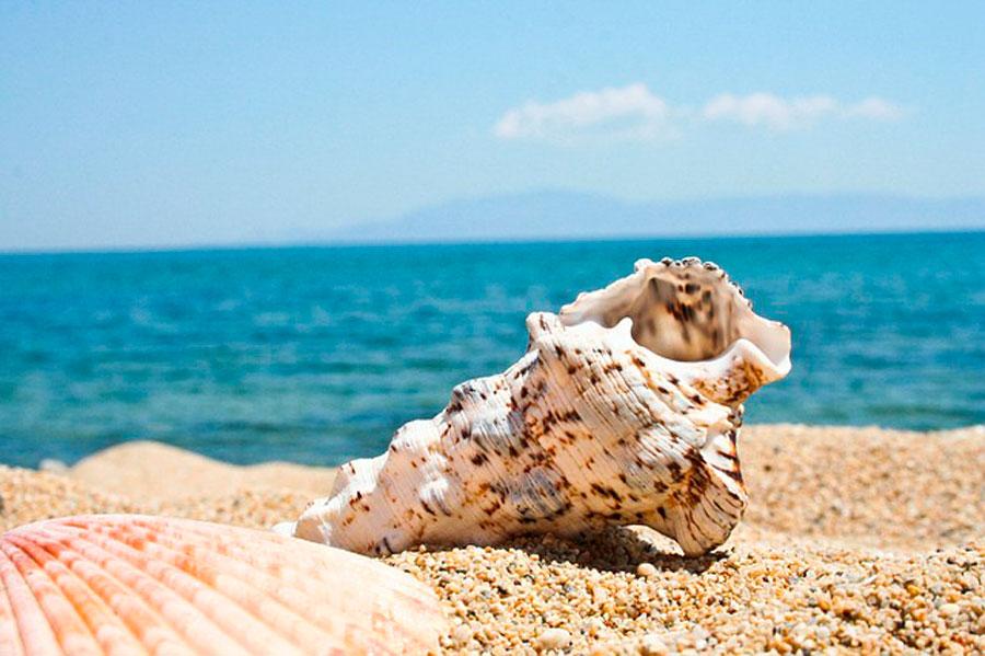 Сонник ракушки морские огромные