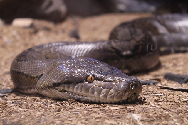 Сонник змея в воде пытается укусить