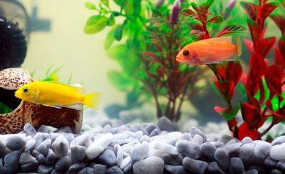 К чему снятся рыбы в аквариуме: девушке, женщине, беременной, мужчине – толкование по разным сонникам