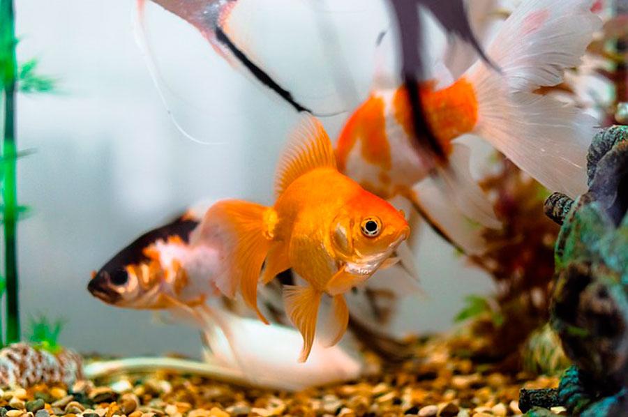К чему снятся в аквариуме девушке