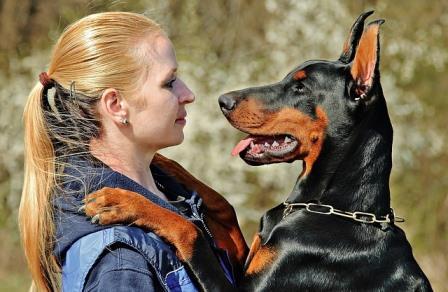 К чему снятся собаки женщине сонник