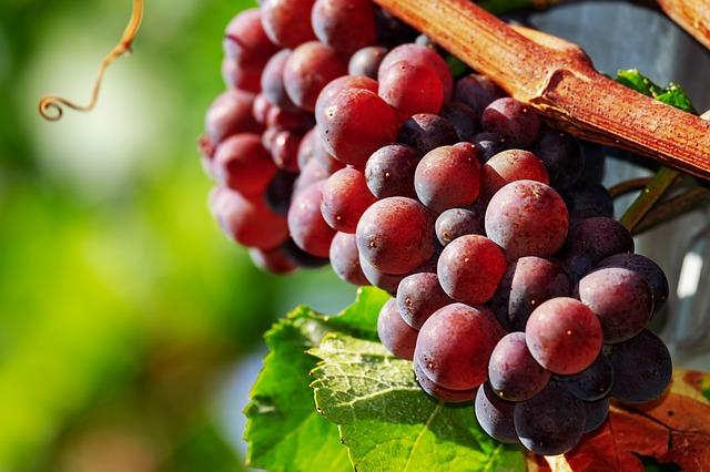 К чему снится виноград женщине? Сонник виноград